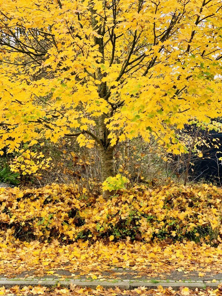 Efterår i byen med gyldne blade